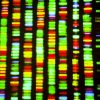Researchers identify genes that may cause gum disease