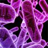 Cefiderocol, A Novel Investigational Siderophore Cephalosporin, Demonstrated Potent Activity Against Multi-Drug Resistant Gram-Negative Pathogens