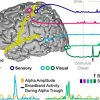 monitoring-the-relationship-between-changes-in-cerebral-oxygenation-and-electroencephalography